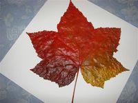 Leaf paintings 2