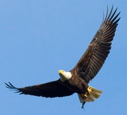 Is it true I'm an eagle?
