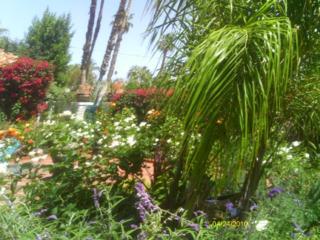 The friendship garden pic one