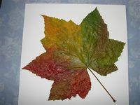 Leaf paintings 3